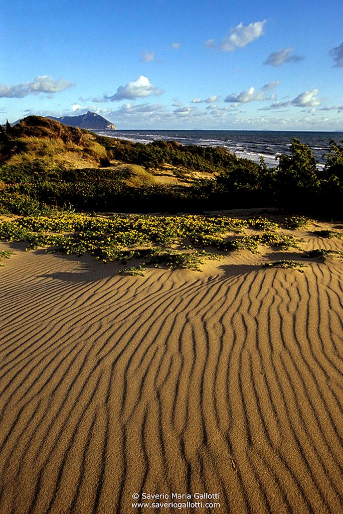 Dune di Sabaudia in primavera (foto di Saverio Maria Gallotti)